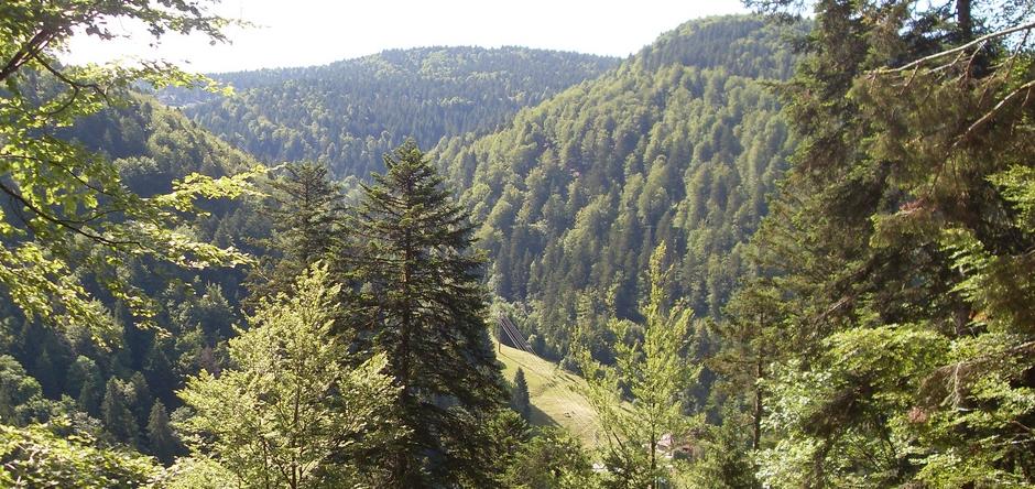 schwarzwald-hotel-slide1